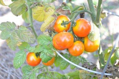 how to grow an edible backyard