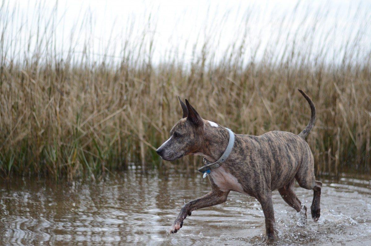running in water