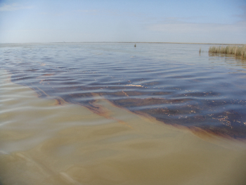 Oil Reaches Louisana Shores