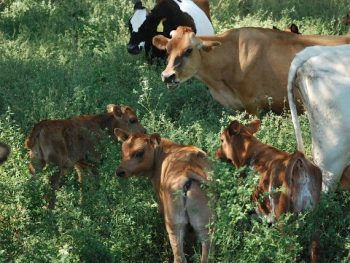 Do You Know Where Your Milk Comes From?