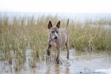 Help your Dog Live Longer! 1