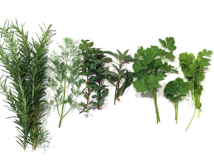 Flavor In Your Front Yard: Starting An Herb Garden
