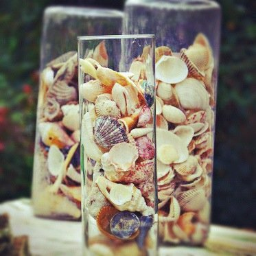 What Do You Do With 1,000 Seashells?
