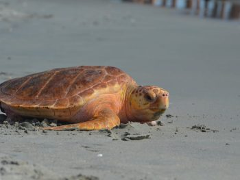 Transitions and Turtle Rescue